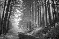 253-forestlane_cascadehead.jpg