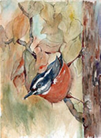 Nuthatch by Becki Hesedahl