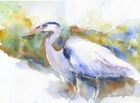 Blue Heron by Becki Hesedahl