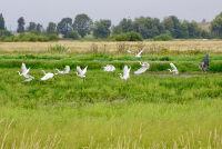Birds in Flight by Laurie Chambreau