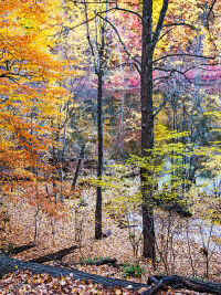 Fall Colors by Rich Bergeman